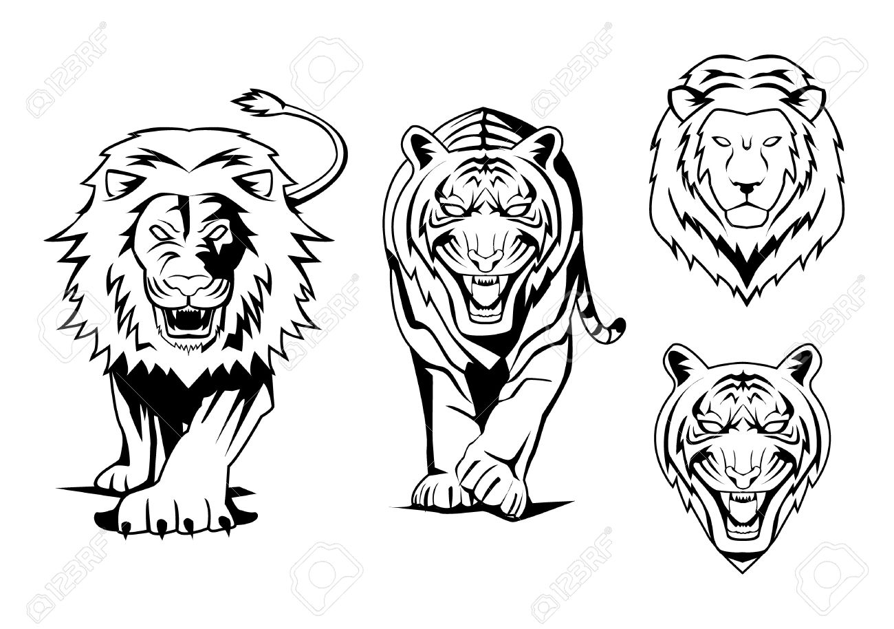 Lion And Tiger Royalty Free Cliparts Vectors And Stock