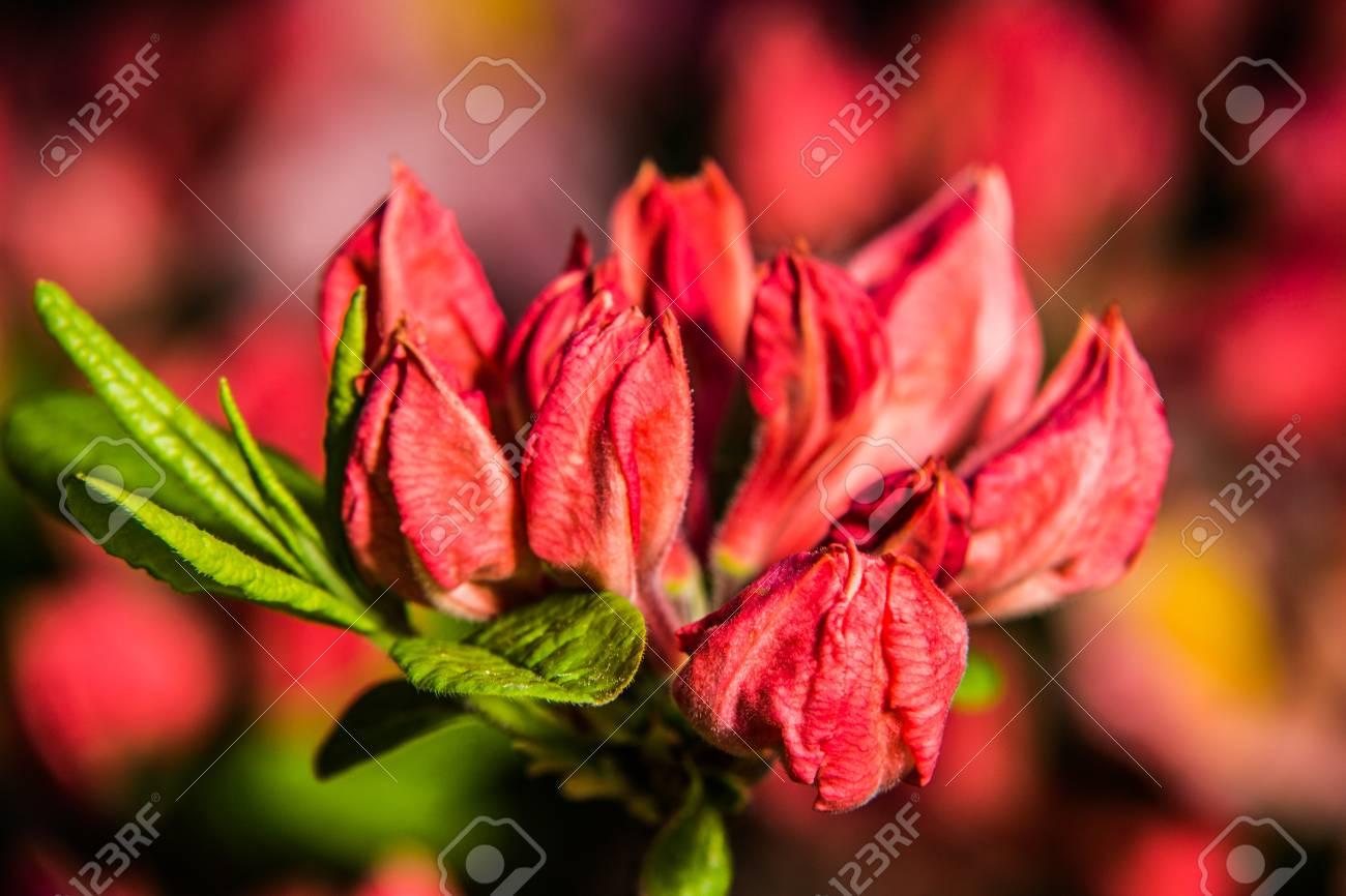Beau Jardin Fleuri Colore Au Printemps Banque D Images Et Photos