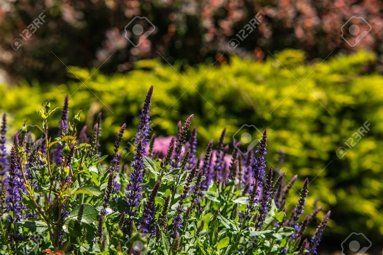 Bouchent Beau Jardin Fleuri Coloré Au Printemps Banque D\'Images Et ...