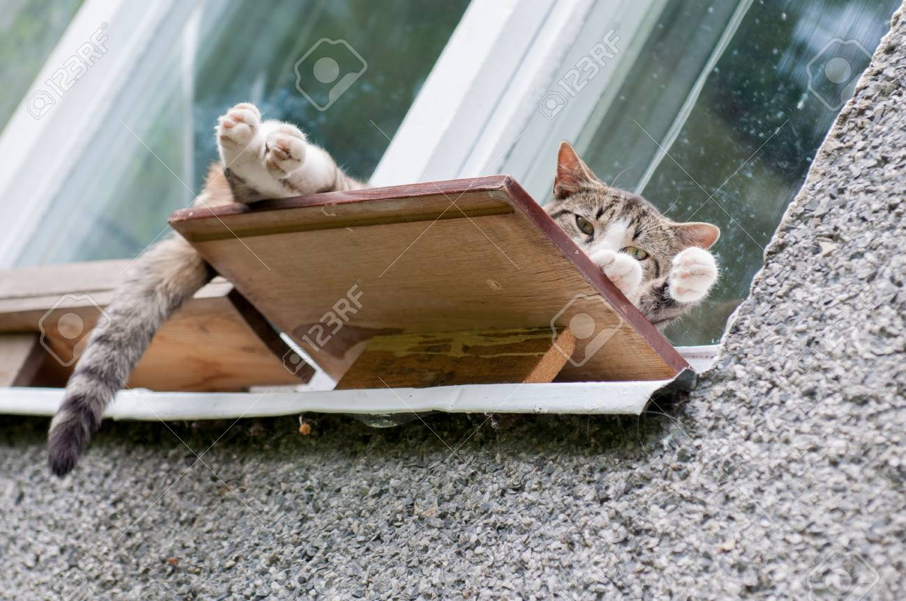 Funny Cat Sleeping In A Funny Posture On The Windowsill Outside Stock Photo    78970510