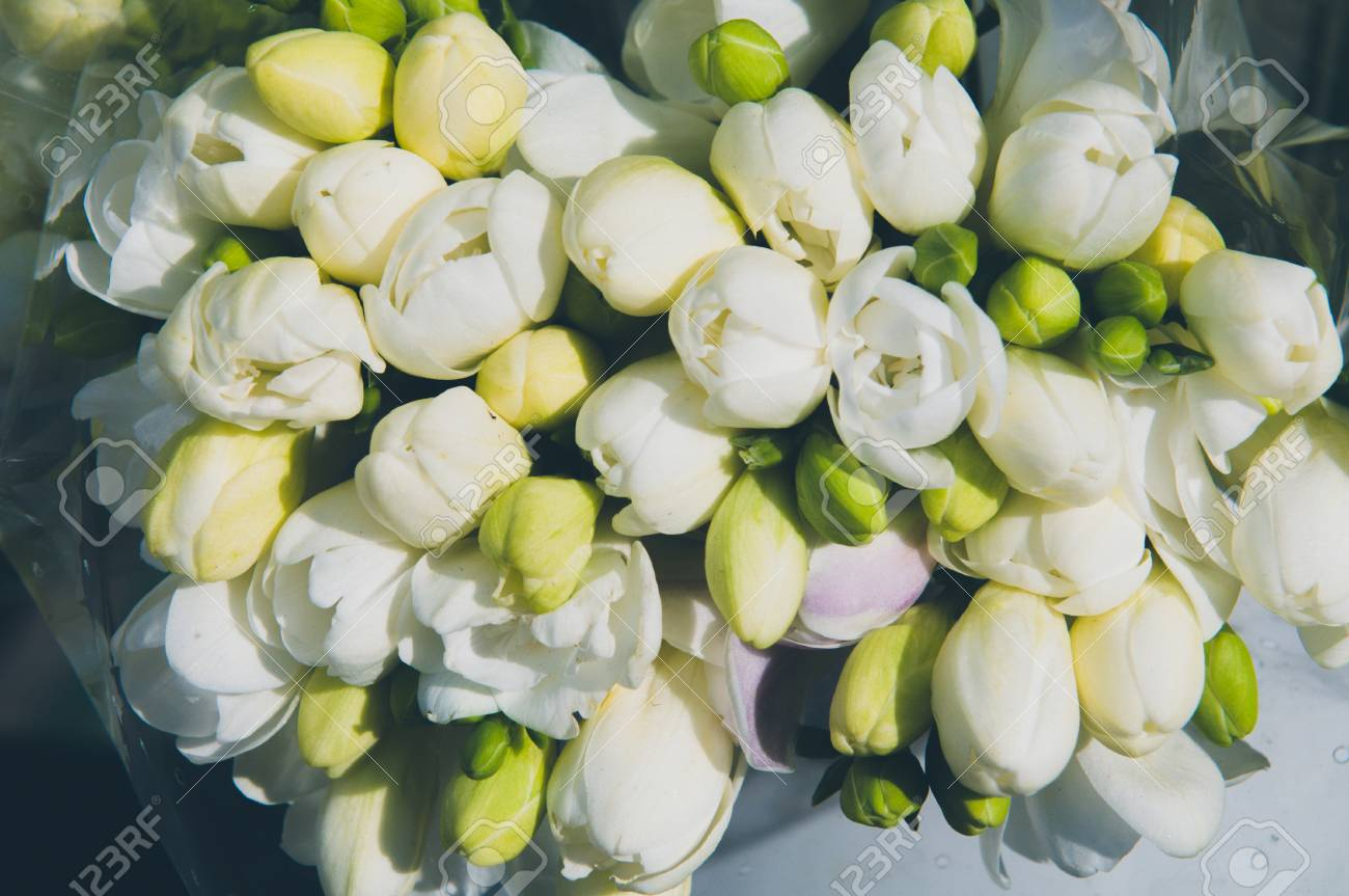 White beautiful bouquet of freesia flowers on a holiday with stock stock photo white beautiful bouquet of freesia flowers on a holiday with love izmirmasajfo