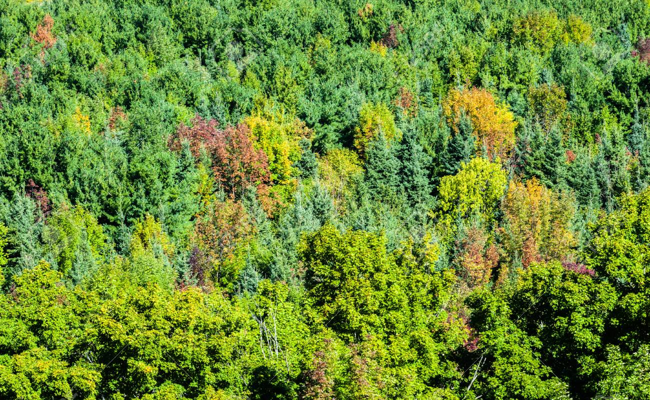 Dense Green Forest From Above With Some Trees Starting To Show ...
