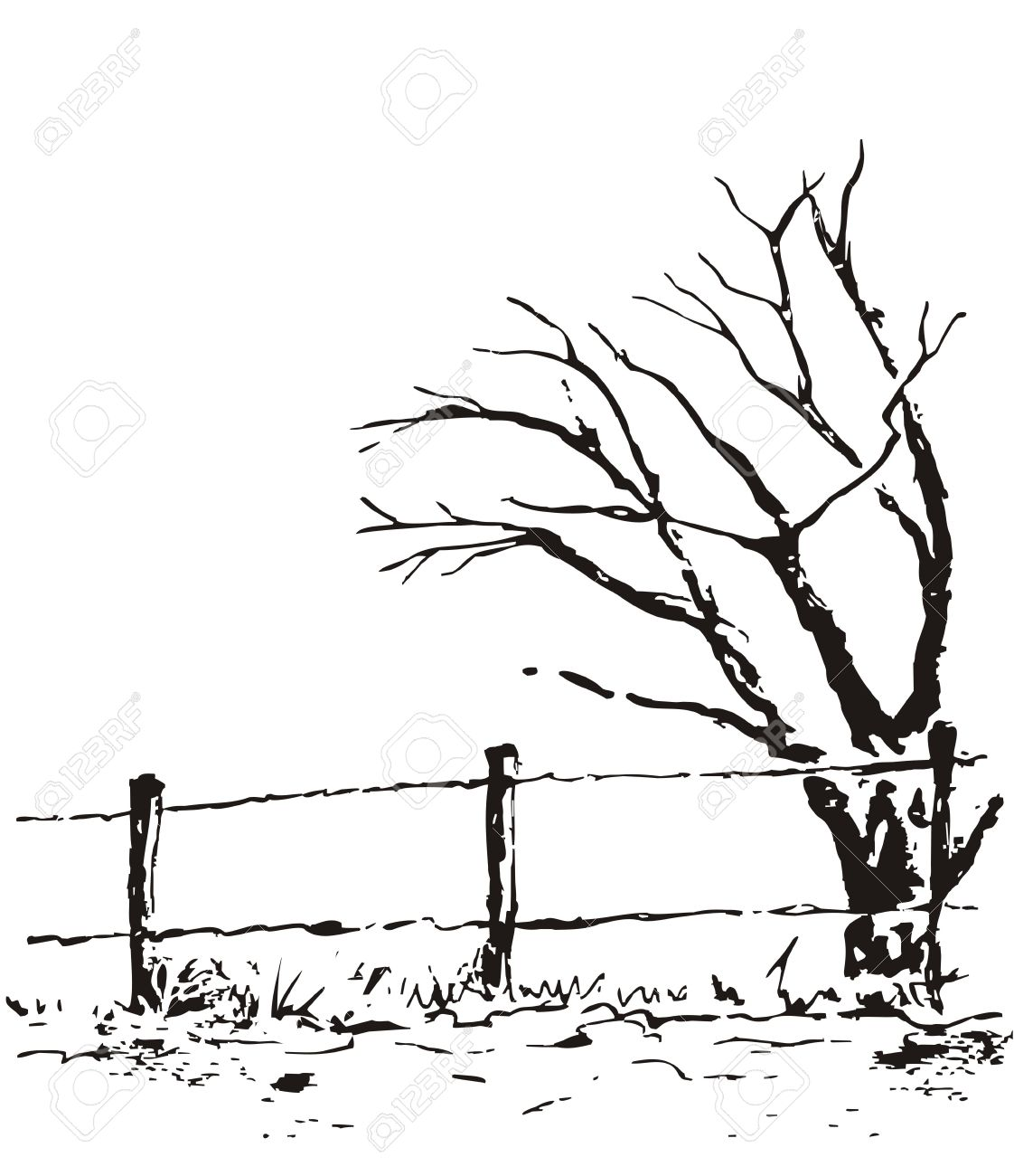 Lonely Tree With Fence. Vector Nature Illustration Isolated On White  Background. Black Ecology Autumn