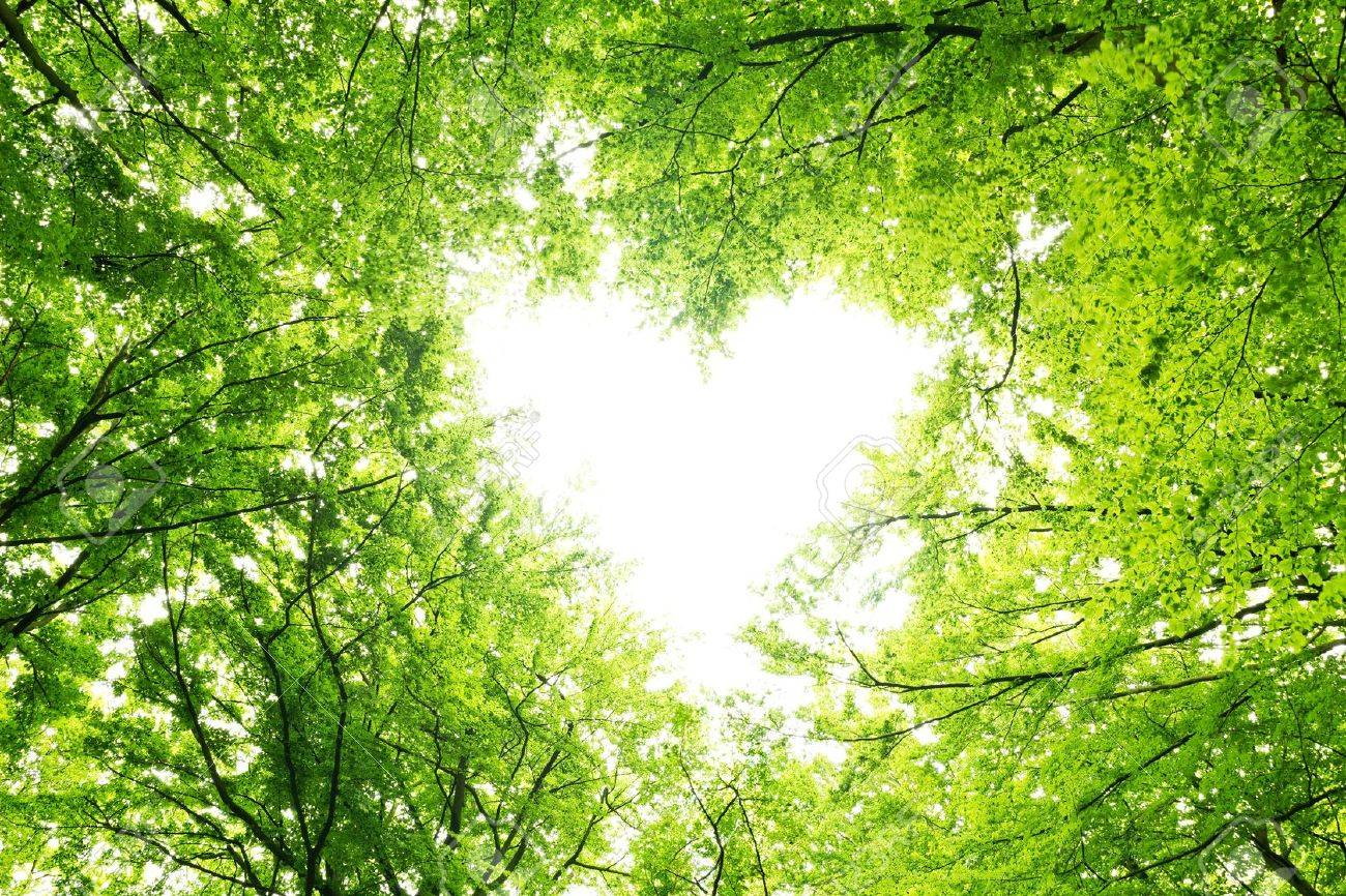 heart shaped opening in a canopy of leaves stock photo picture