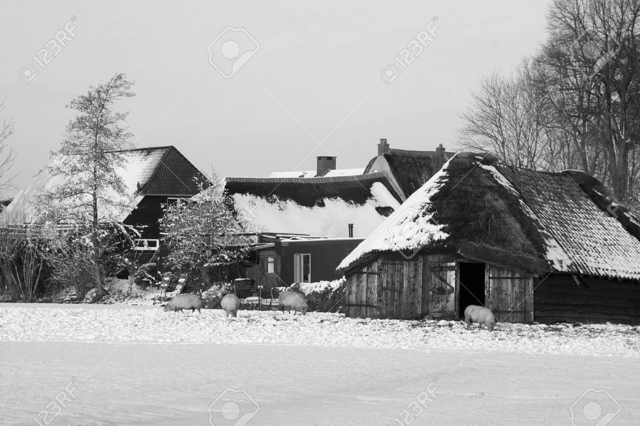 Sheepfold in Holland in the snow black and white Stock Photo - 17057949