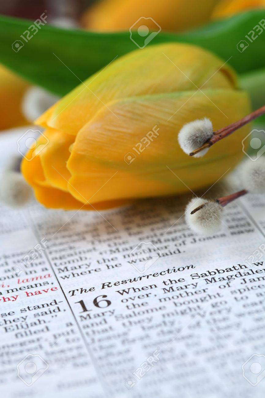 Open Bible with focus on the text in Mark 16 about Jesus' resurrection. Shallow DOF Stock Photo - 6660354