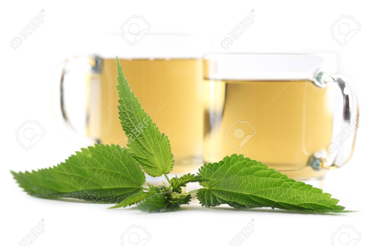 Nettle and freshly made nettle tea in glass cups isolated on white background  Shallow dof, focus on nettle Stock Photo - 14123573