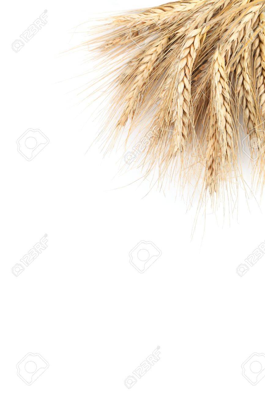 Barley frame isolated on white background with copy space Stock Photo - 14782025