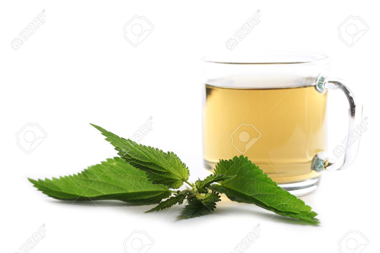 Nettle and freshly made nettle tea in a glass cup isolated on white background  Shallow dof, focus on nettle Stock Photo - 15083210