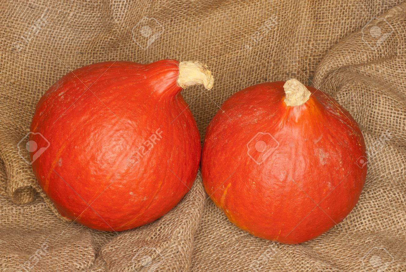 Two Hokkaido pumpkins, Cucurbita maxima Standard-Bild - 10605932