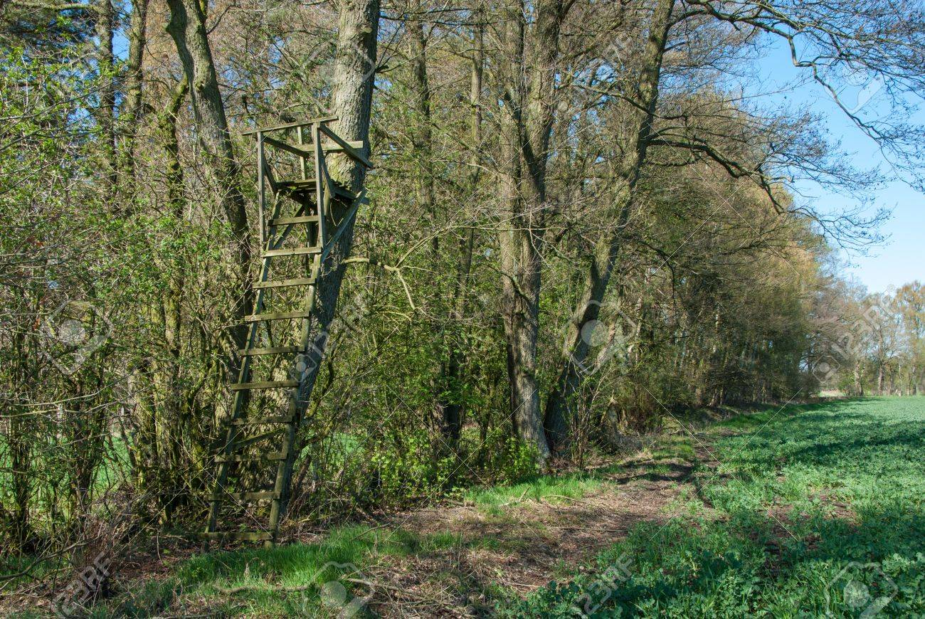 Ladder stand at a tree on the edge of the forest Standard-Bild - 18997015