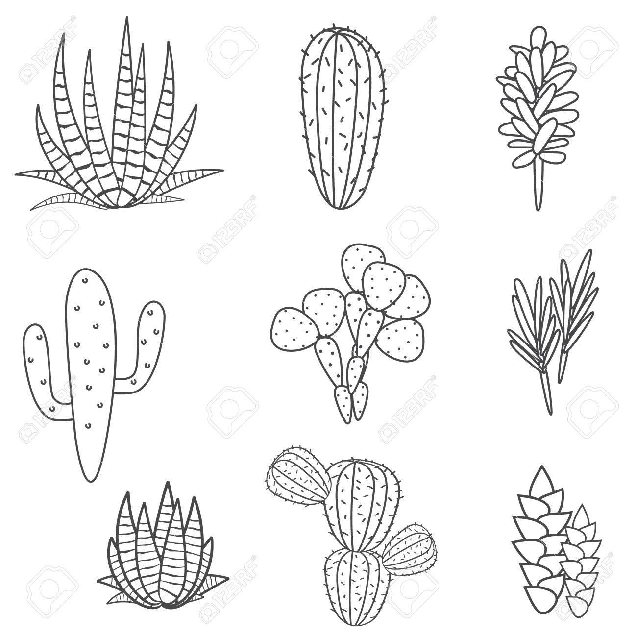 Suculentas Cactus Planta De Conjunto De Vectores. Botánico Colección ...