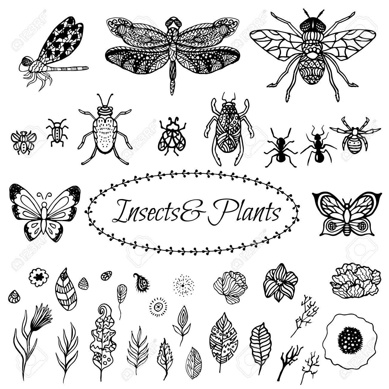 Kleurplaten Van Insecten.Hand Getrokken Vector Zentangle Zwarte Bladeren Bloemen En Insecten