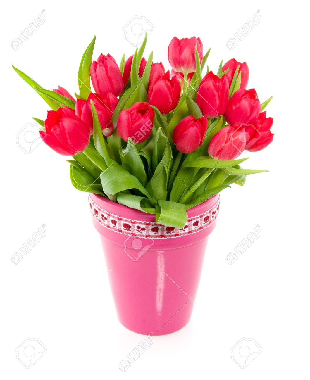 a bouquet of red colorful tulips in a pink vase with a red white ribbon  isolated over white Stock Photo - 14176363