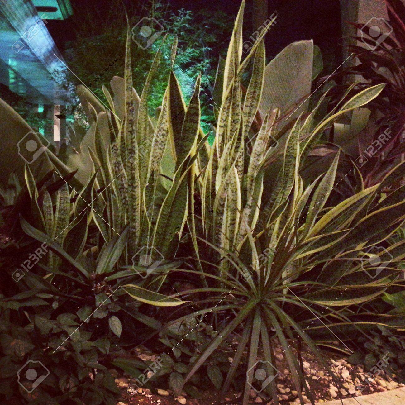 Image Of Plants At Night Time Stock Photo Picture And Royalty