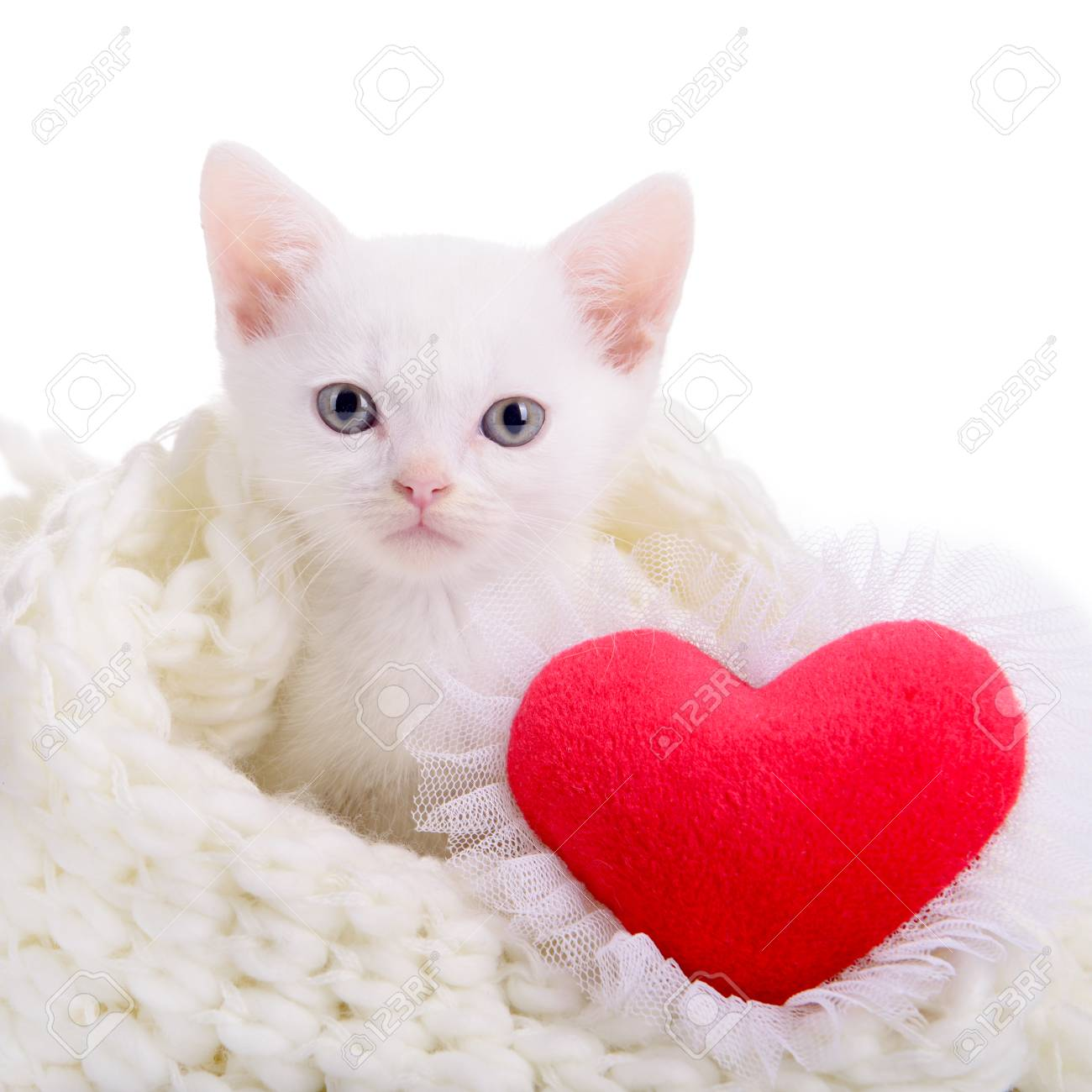 Little White Kitten With Red Heart Valentine S Day Stock Photo