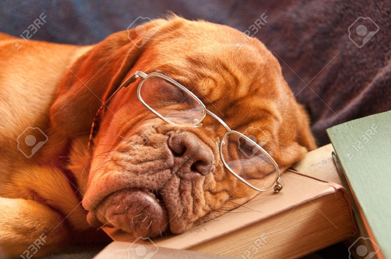 http://previews.123rf.com/images/innocent/innocent1005/innocent100500138/6992327-clever-dog-with-glasses-sleeping-over-an-interesting-book-Stock-Photo.jpg