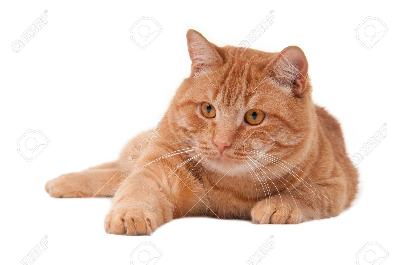 Playful cat with its paw stretching forward Stock Photo - 8376685