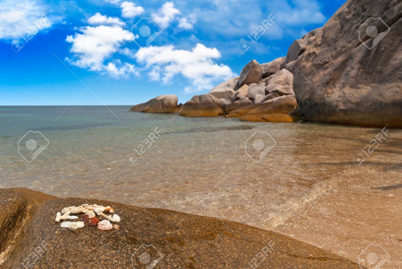 Seashells on a rock on the beach of exotic bay Stock Photo - 11520044