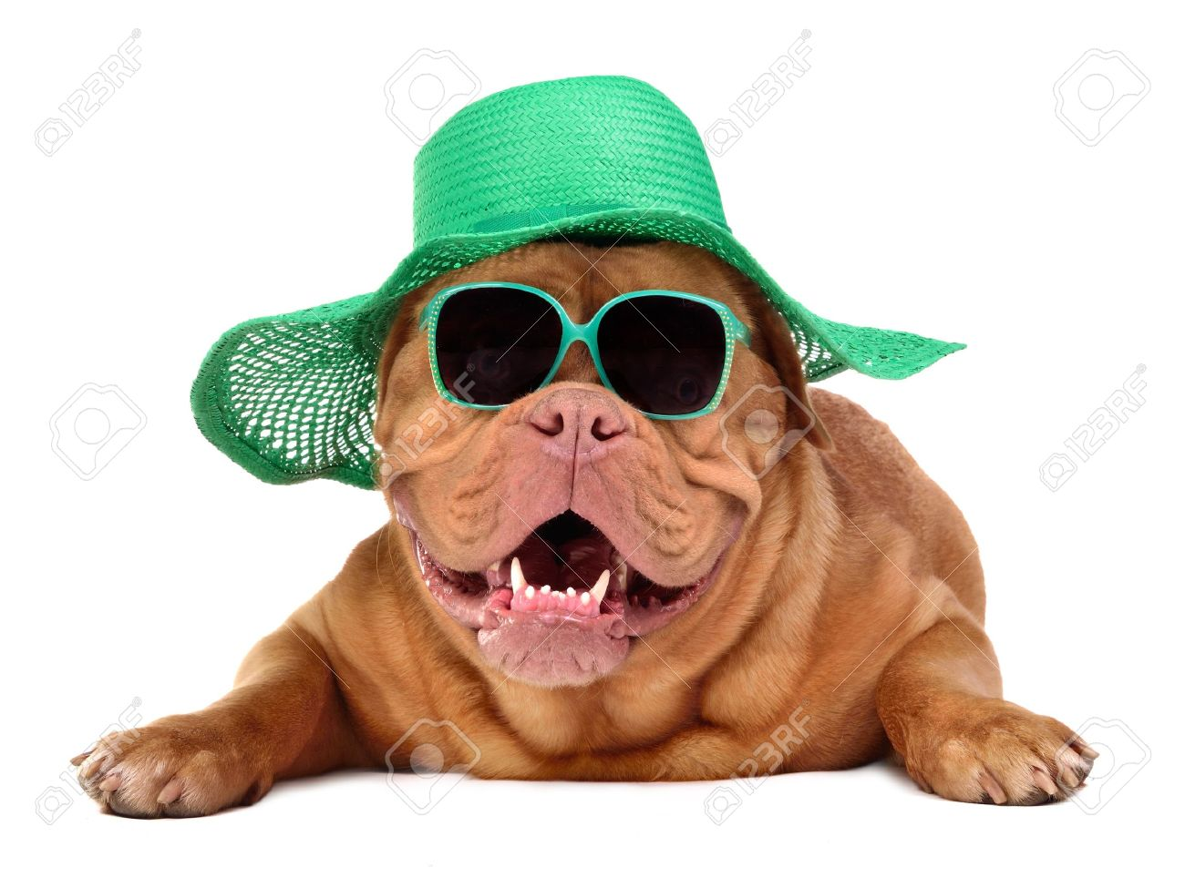 Dog wearing green straw hat and sun glasses, isolated Stock Photo - 11550590