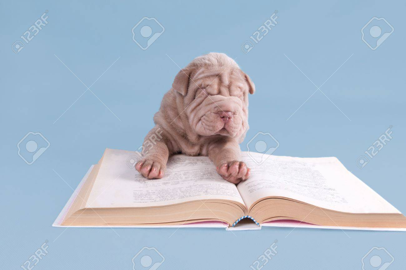 Shar-pei puppy is reading a fairytale. Stock Photo - 11710065