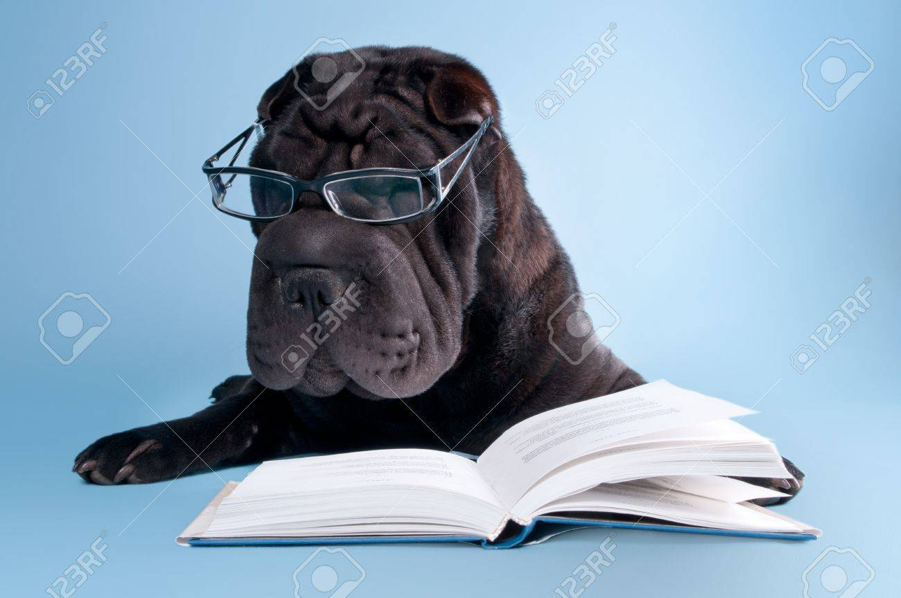 Black shar-pei dog with glasses is reading a book Stock Photo - 11694087