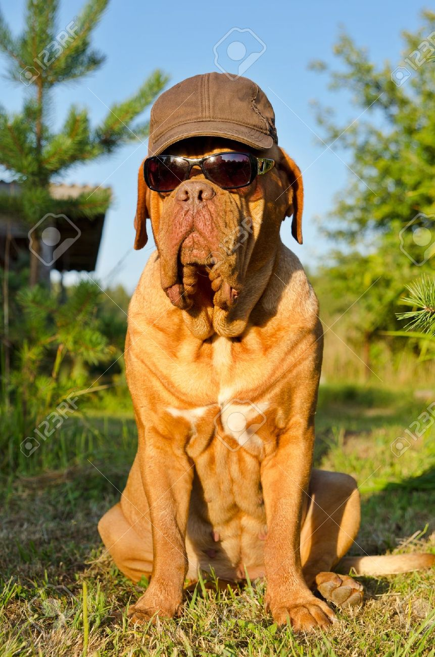 Dog with peaked cap and sunglasses sitting in the garden Stock Photo - 12615999