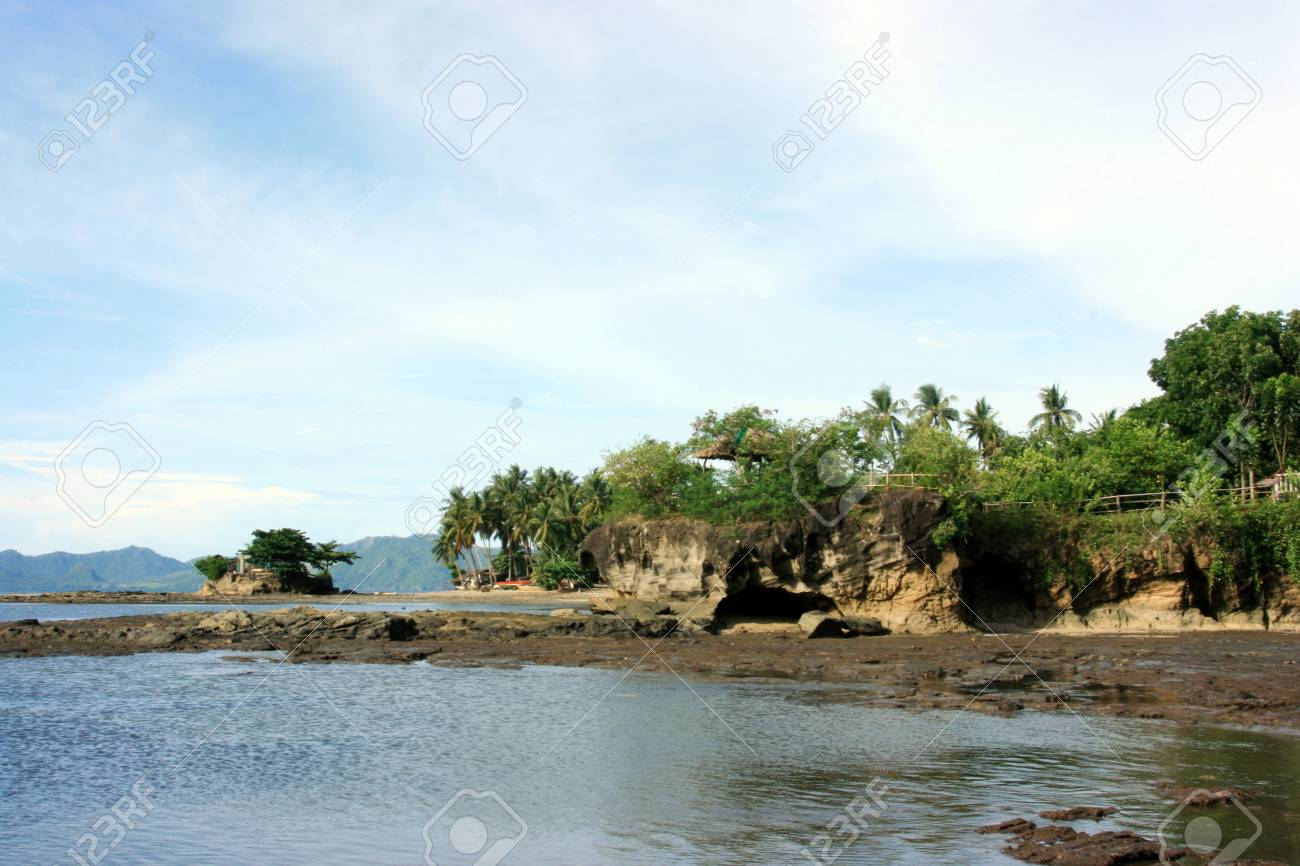 Mangroove plant on a rocky shore Stock Photo - 9837498