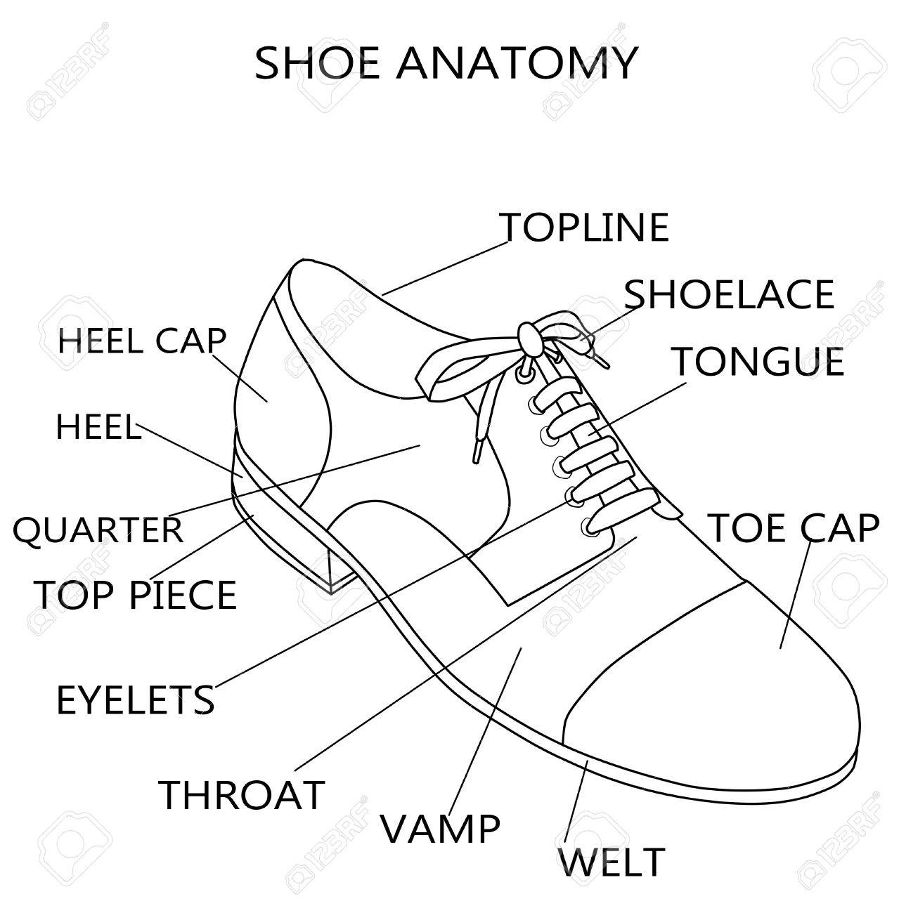 Fashion Illustration - Raster Illustration Of The Anatomy Of.. Stock ...