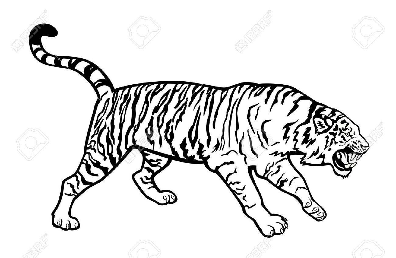 attacking Siberian tiger black and white isolated on white background Stock Vector - 15207492