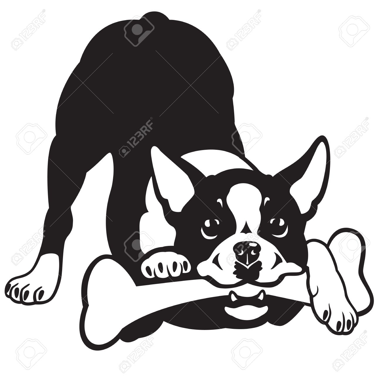 297 boston terrier stock illustrations cliparts and royalty free