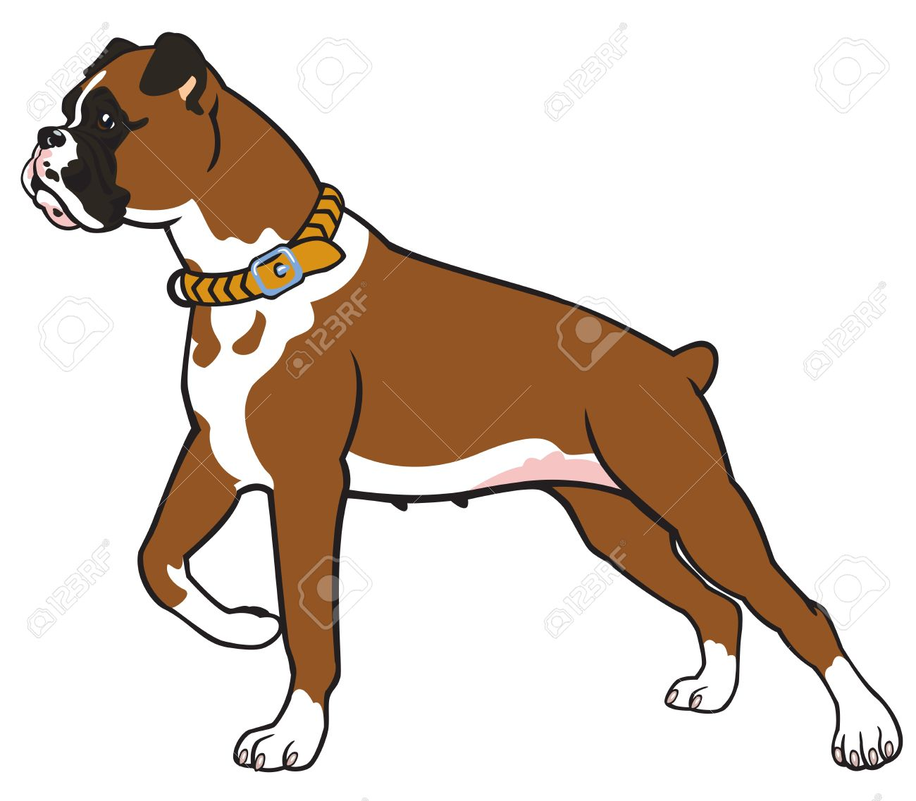 2 300 boxer dog stock vector illustration and royalty free boxer