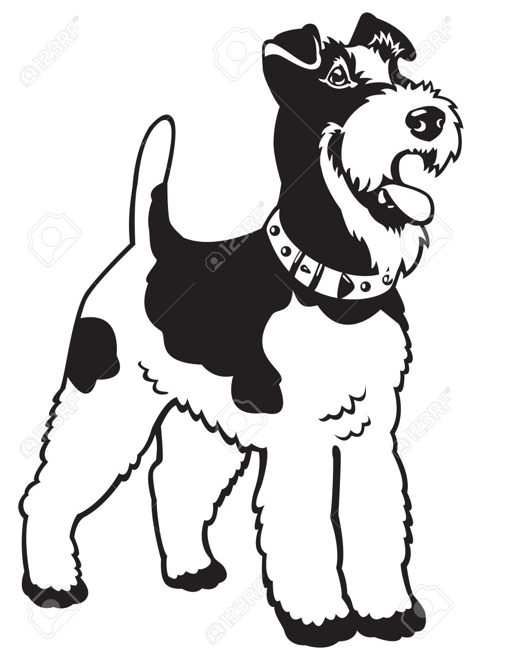 dog,fox terrier breed,black and white vector picture isolated on white background,standing pose Stock Vector - 16526638