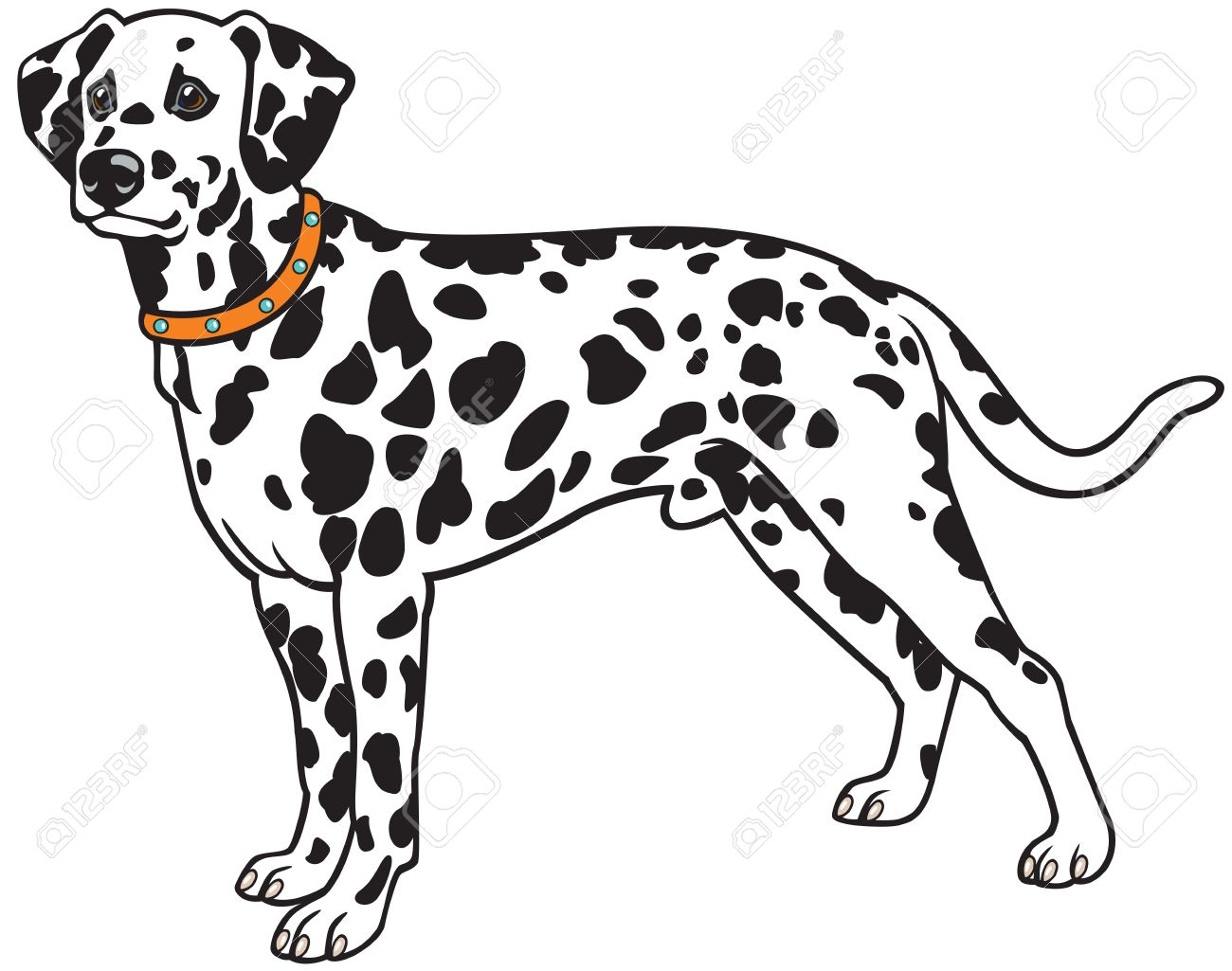 dalmatian dog breed,vector picture isolated on white background Stock Vector - 16565246