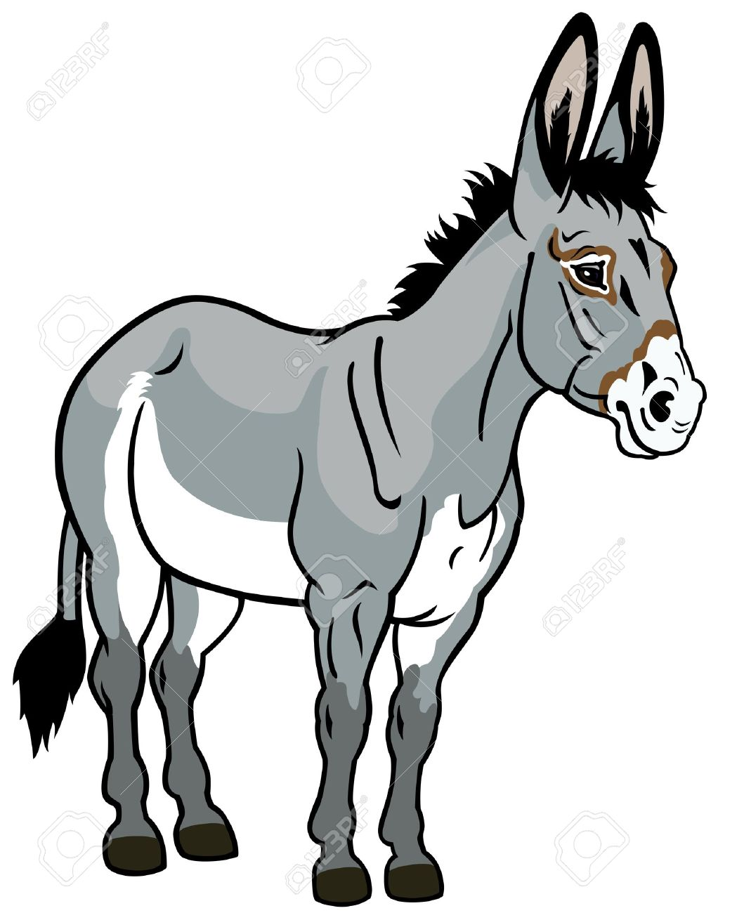 donkey,front view illustration isolated on white background Stock Vector - 17501090