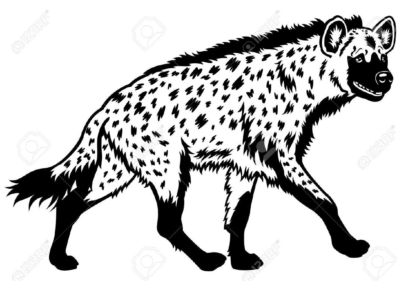Spotted hyenaafrica animalblack white pictureside view illustration stock vector