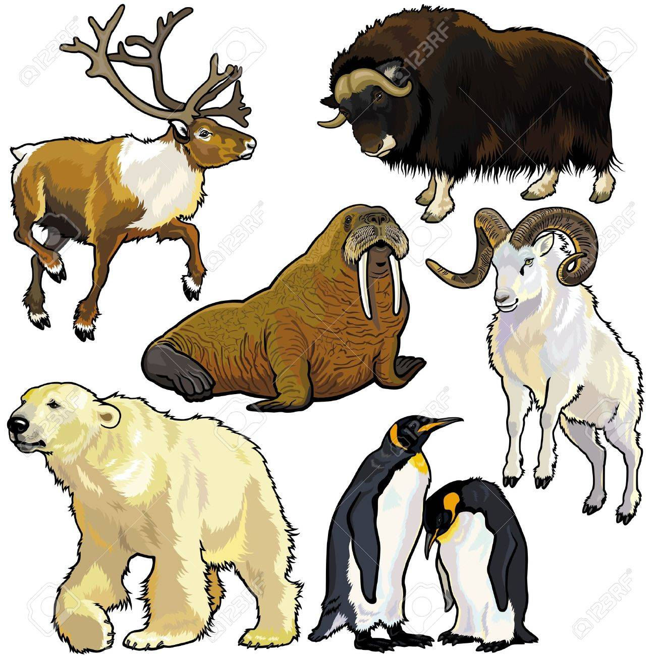 Set With Animals Of Arcticpictures Isolated On White Background