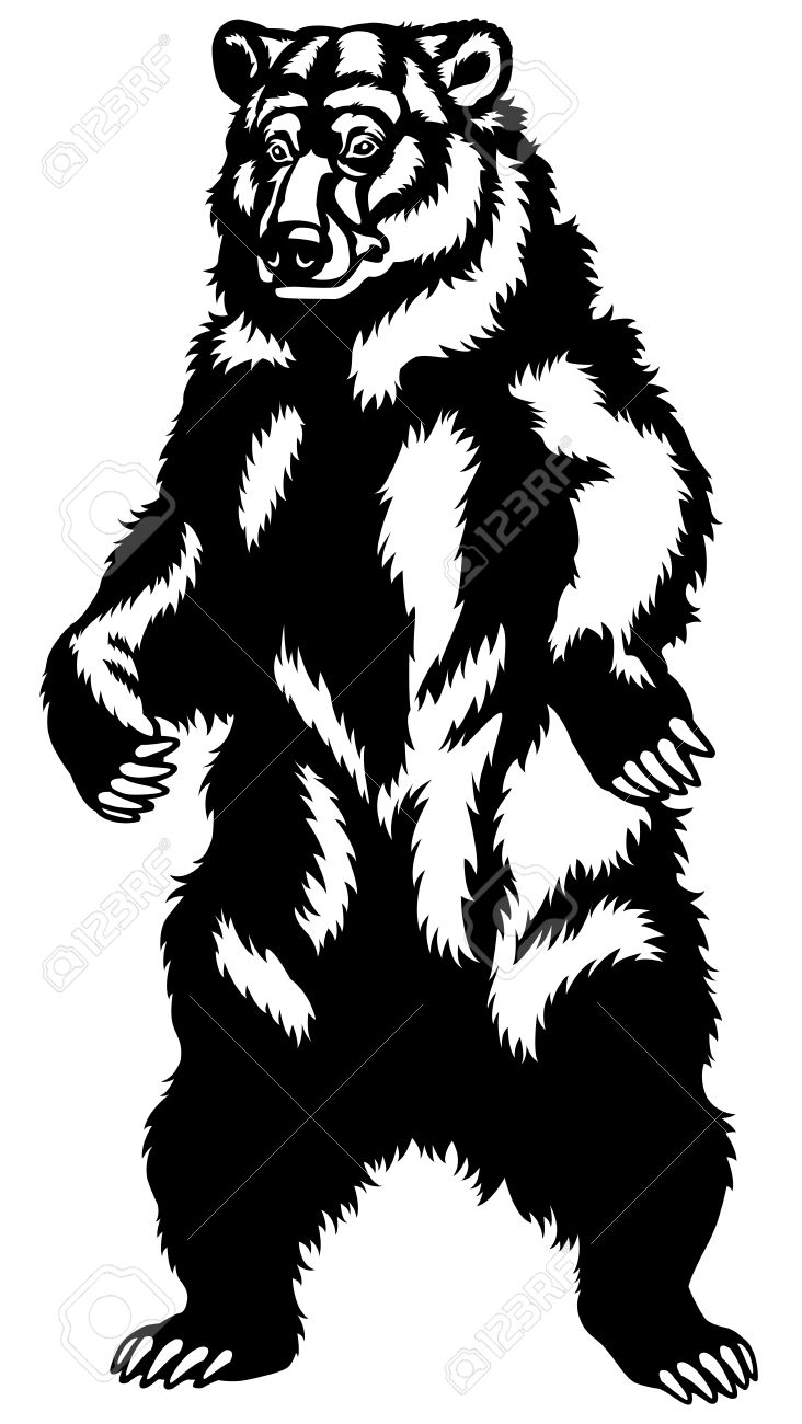 881 native bear stock vector illustration and royalty free native