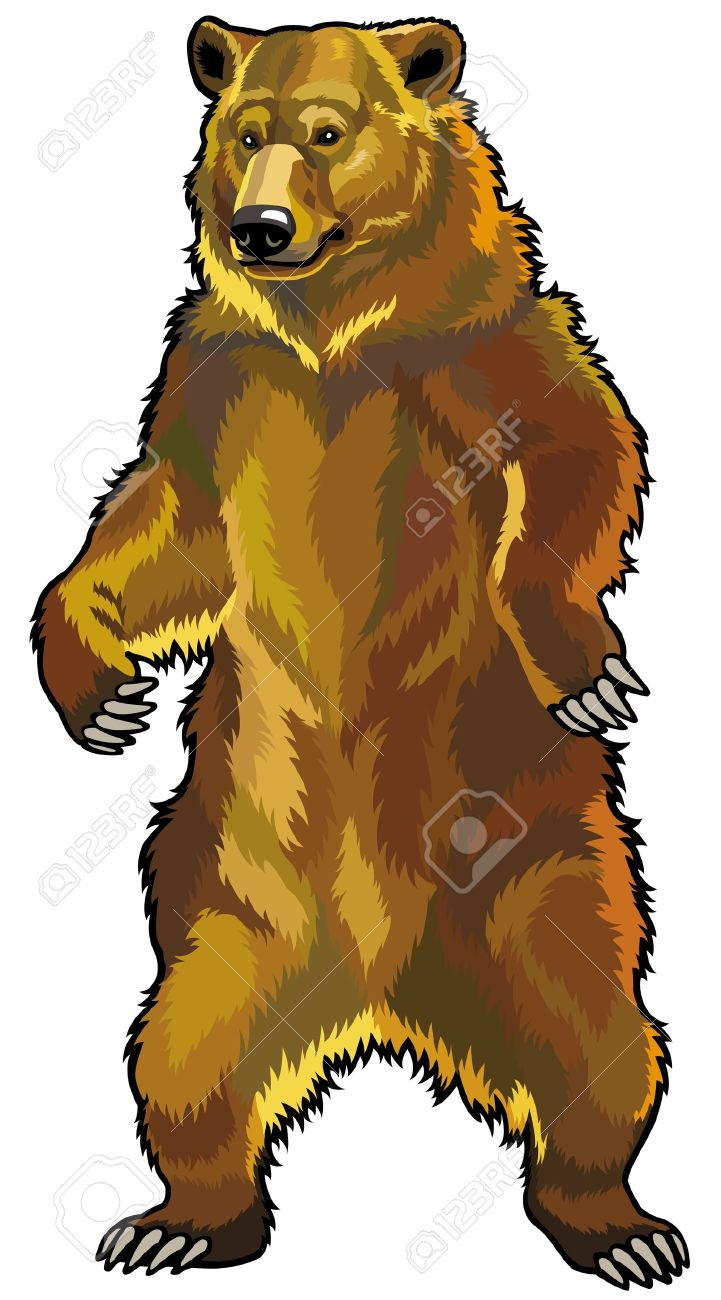 grizzly bear,ursus arctos horribilis,front view picture isolated on white background Stock Vector - 19092463