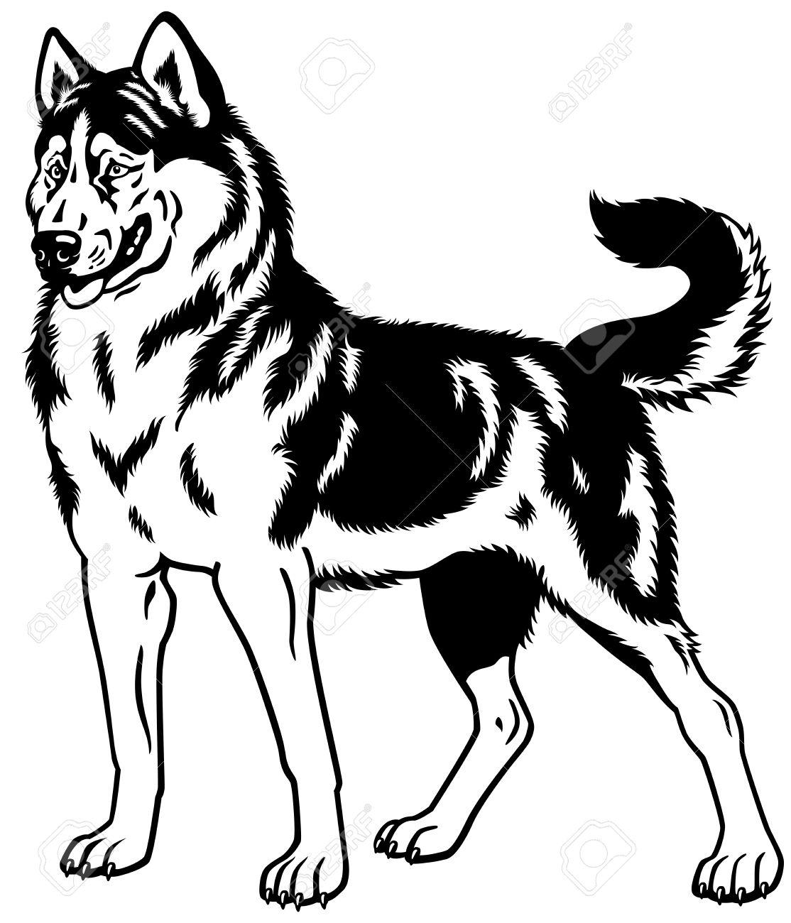 犬シベリアン ハスキー犬黒と白のイラストのイラスト素材ベクタ