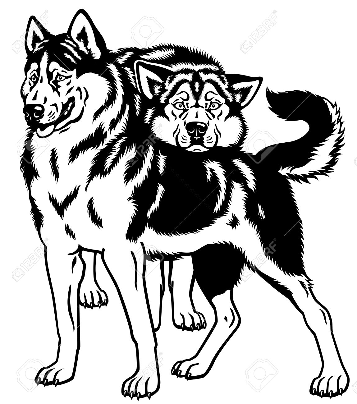 1 024 siberian husky dogs cliparts stock vector and royalty free