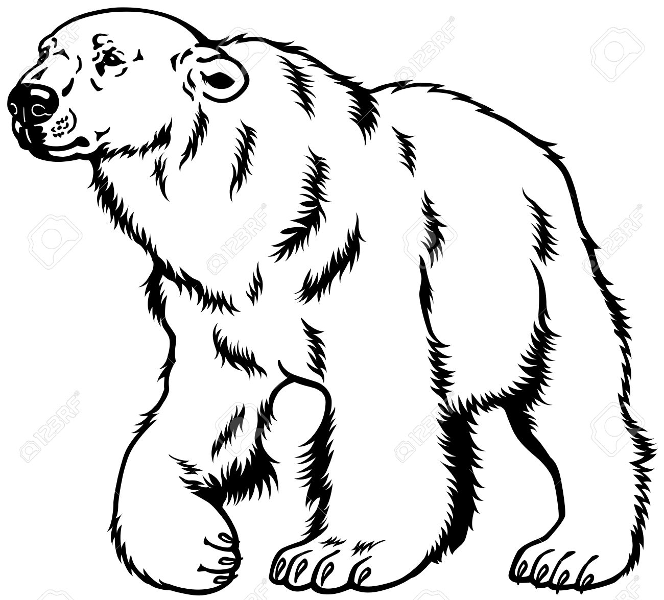 Polar bear clipart black and white