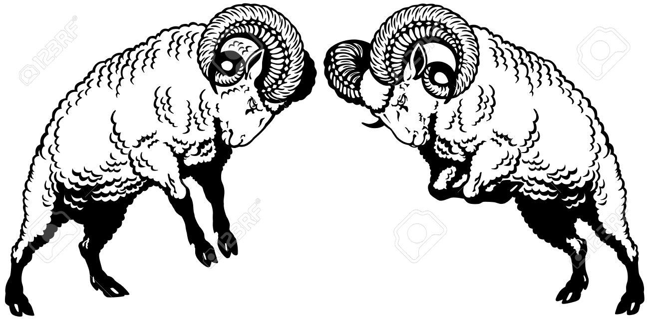 Schafsbock Hörner Regenbogen