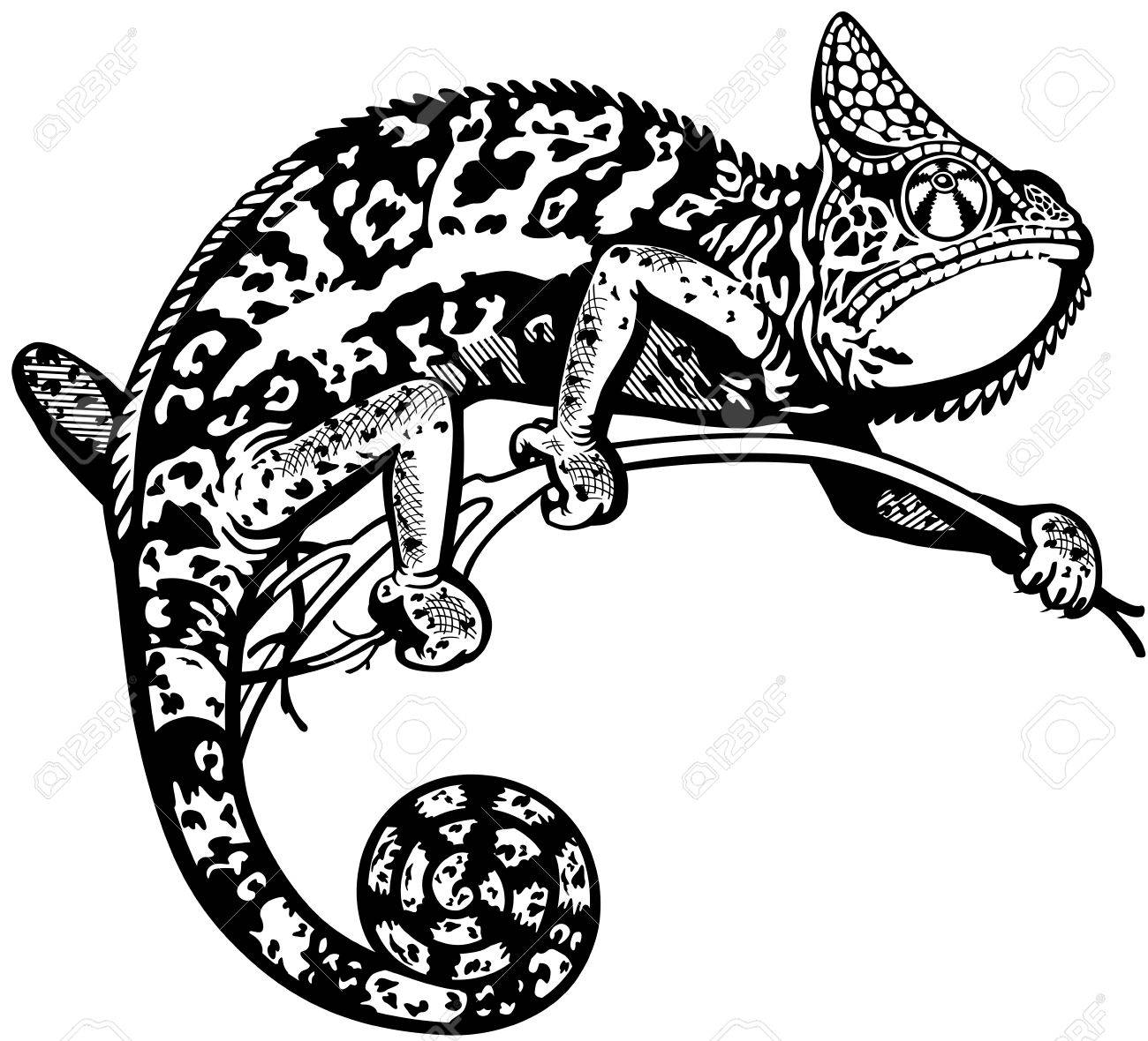 Chameleon Lizard, Black And White Side View Isolated Image Royalty ... for Clipart Lizard Black And White  51ane