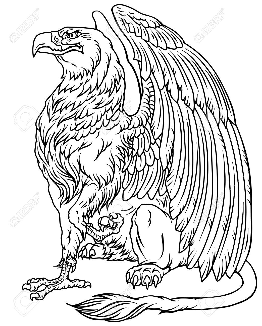 Griffin Griffon Or Gryphon A Mythical Beast Having The Body Royalty Free Cliparts Vectors And Stock Illustration Image 150171023 Start the drawing of the lion by first outlining the basic shape of it's body and head. griffin griffon or gryphon a mythical beast having the body