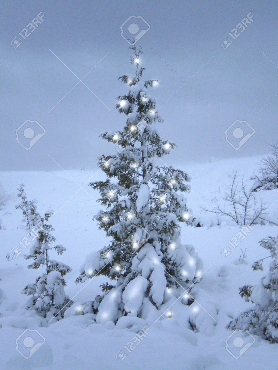 A Snow Covered Christmas Tree With Lights. Stock Photo, Picture ...