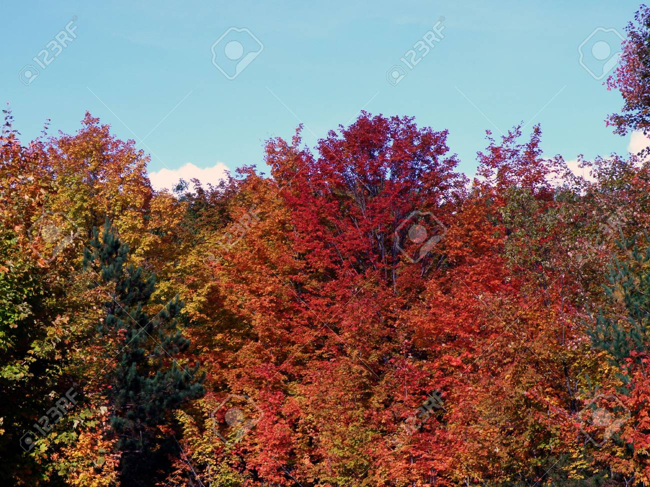 Bright leaves on a clear sunny day. Colorful autumn changes at their peak. Stock Photo - 5710776