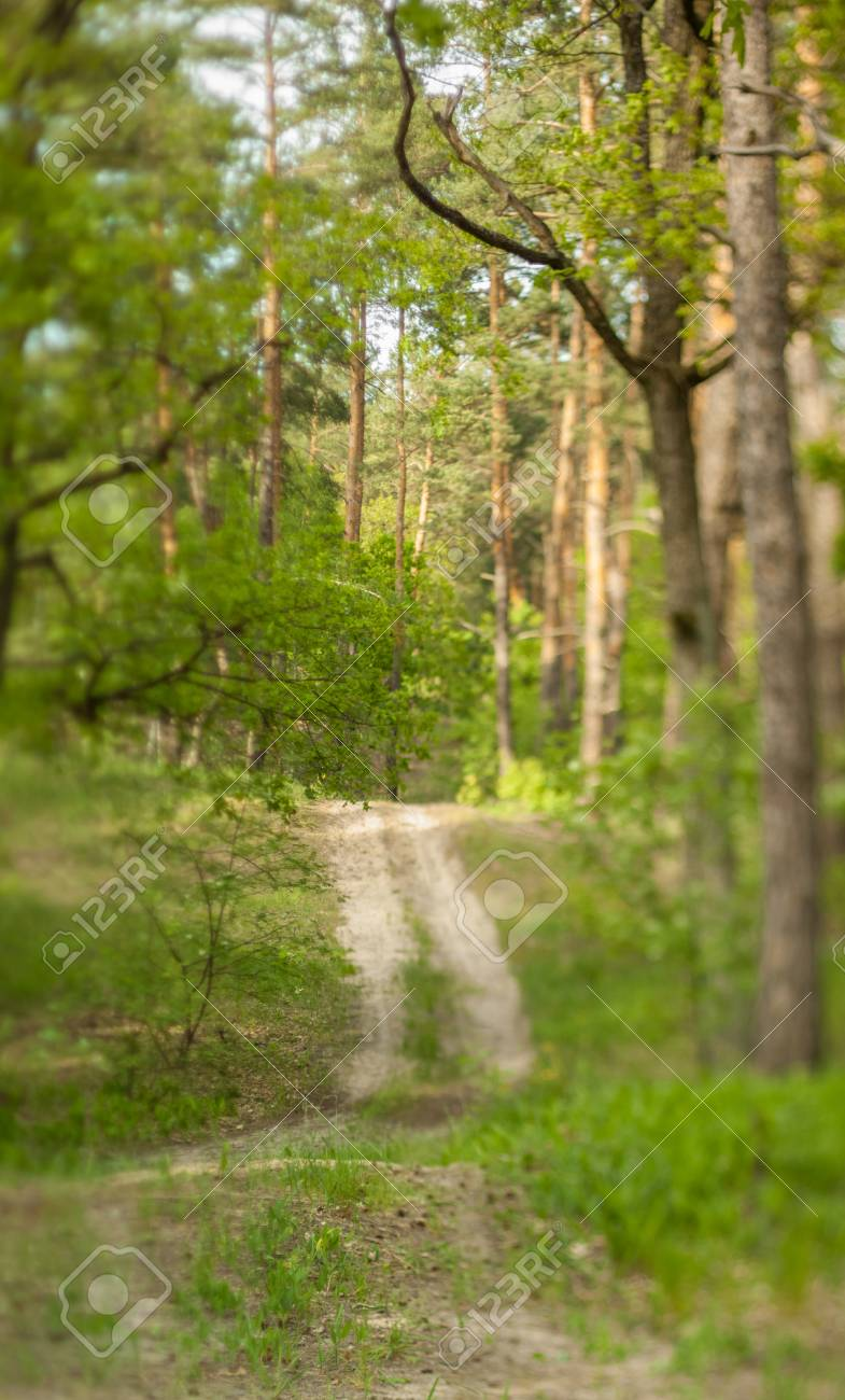 Blurry Nature Wallpaper. Forest Bokeh Background. Green Defocused