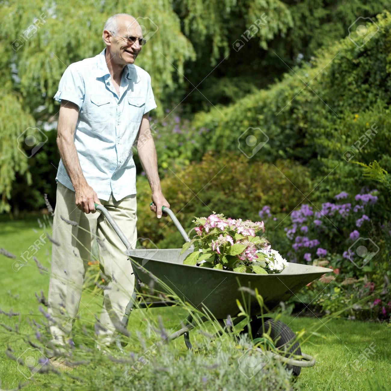 Senior man doing yard work Stock Photo - 26263051