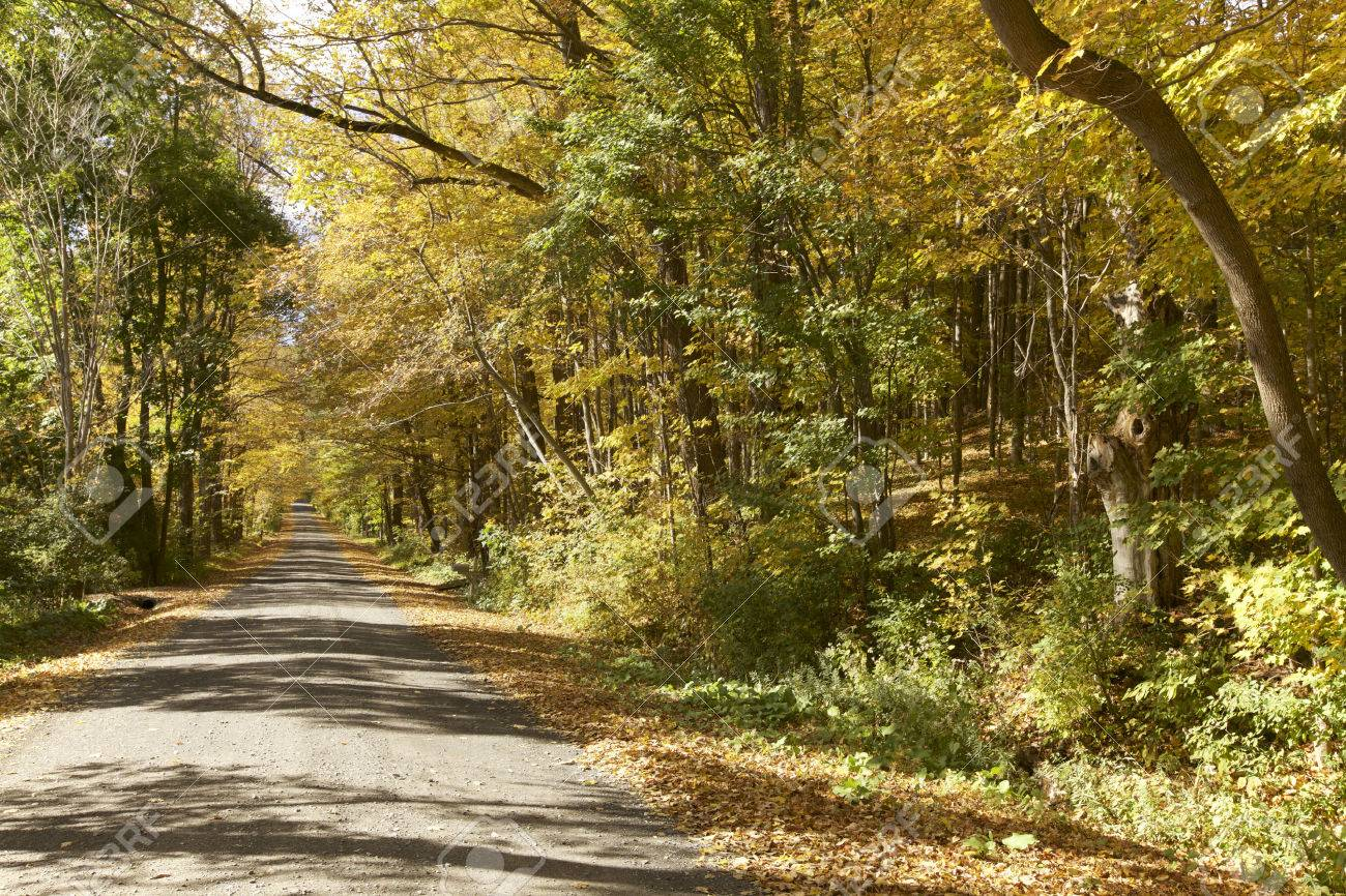 Autumn Foliage in Vermont - 47929210